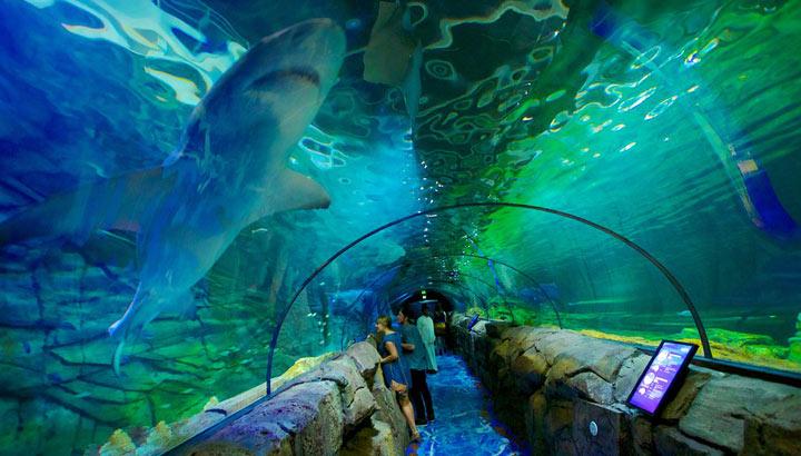 اكواريوم سيدني من افضل الاماكن السياحية في سيدني استراليا