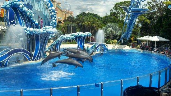 مسرح الدلافين في عالم البحار