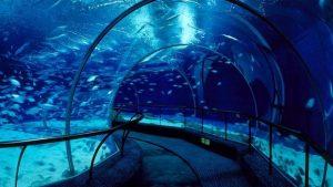 تعرف في المقال على افضل الانشطة السياحية في حوض اسماك المحيط شنغهاي ، بالإضافة الى افضل فنادق شنغهاي القريبة منه