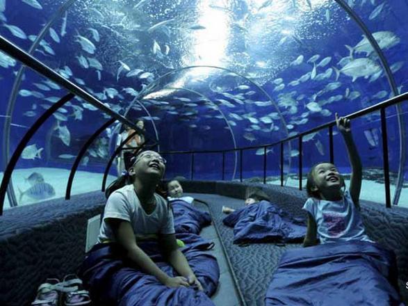 حوض أسماك شنغهاي من اهم اماكن سياحية في شنغهاي الصين