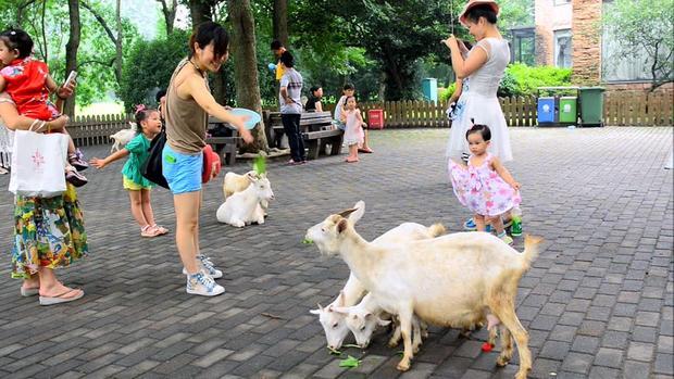 حديقة حيوانات شنغهاي من اشهر حدائق شنغهاي الصين