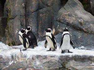 تعرف في المقال على افضل الانشطة السياحية في حديقة حيوانات شنغهاي ، بالإضافة الى افضل فنادق شنغهاي القريبة منها