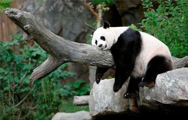 حديقة حيوان شنغهاي من اهم حدائق شنغهاي السياحية