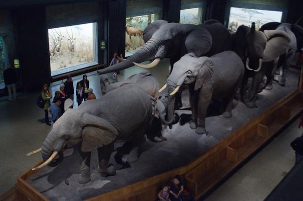 المتحف الأمريكي للتاريخ الطبيعي