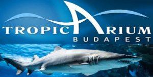 حوض اسماك تروبيكاريوم بودابست