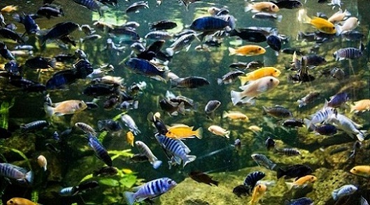 حوض اسماك تروبيكاريوم في مدينة بودابست هنغاريا