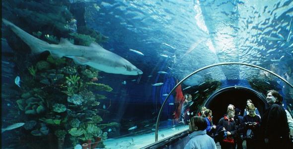 حوض أسماك تروبيكاريوم من اجمل اماكن السياحة في بودابست الهنغارية
