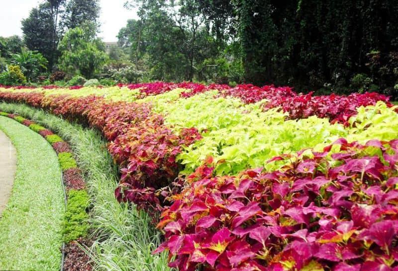 حديقة فكتوريا نوراليا