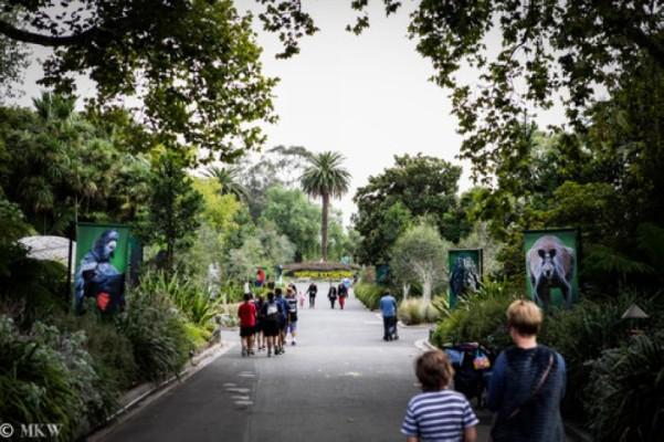 حديقة حيوانات ملبورن من افضل الاماكن السياحية في استراليا