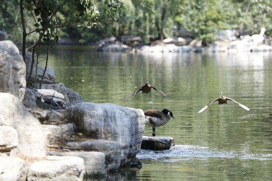 حديقة الحيوانات في بكين من افضل الاماكن السياحية في بكين الصين