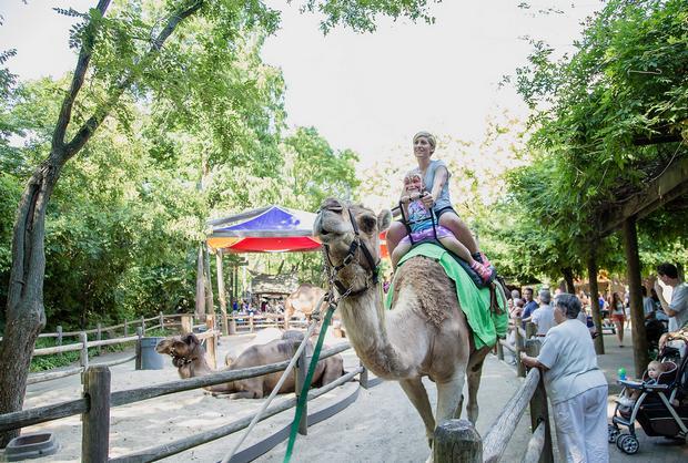 حديقة حيوان برونكس من افضل الاماكن السياحية في نيويورك