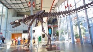 تعرف في المقال على افضل الانشطة السياحية في اكاديمية كاليفورنيا للعلوم في سان فرانسيسكو ، بالإضافة الى افضل فنادق سان فرانسيسكو القريبة منها