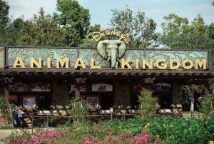 تعرف في المقال على افضل الانشطة السياحية في مملكة ديزني للحيوانات اورلاندو ، بالإضافة الى افضل فنادق اورلاندو القريبة منها