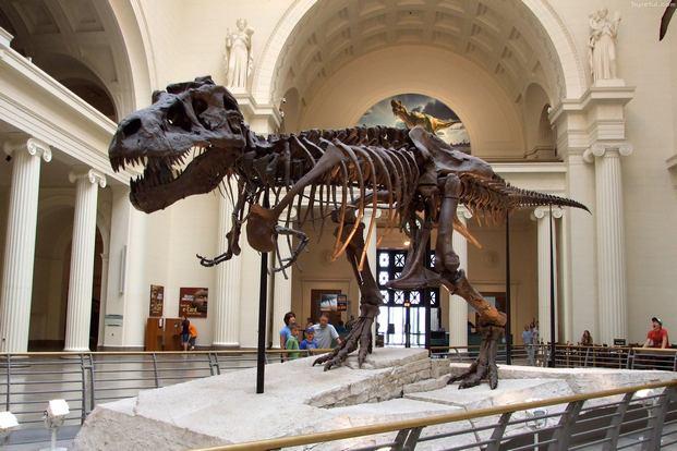 المتحف الميداني للتاريخ الطبيعي شيكاغو