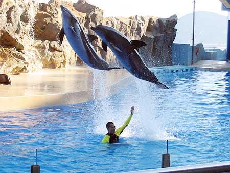 تعتبر حديقة الحيوانات في كوانزو من اجمل الاماكن السياحية في كوانزو الصين
