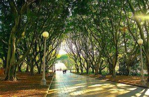 تعرف في المقال على افضل الانشطة السياحية في حديقة هايد بارك ، بالإضافة الى افضل فنادق سيدني القريبة منها
