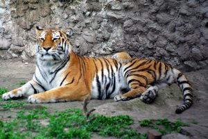 حديقة حيوانات اوديسا