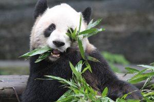 تعرف في المقال على افضل الانشطة السياحية عند زيارة حديقة الحيوانات في تورنتو ، بالإضافة الى افضل فنادق تورنتو القريبة منها