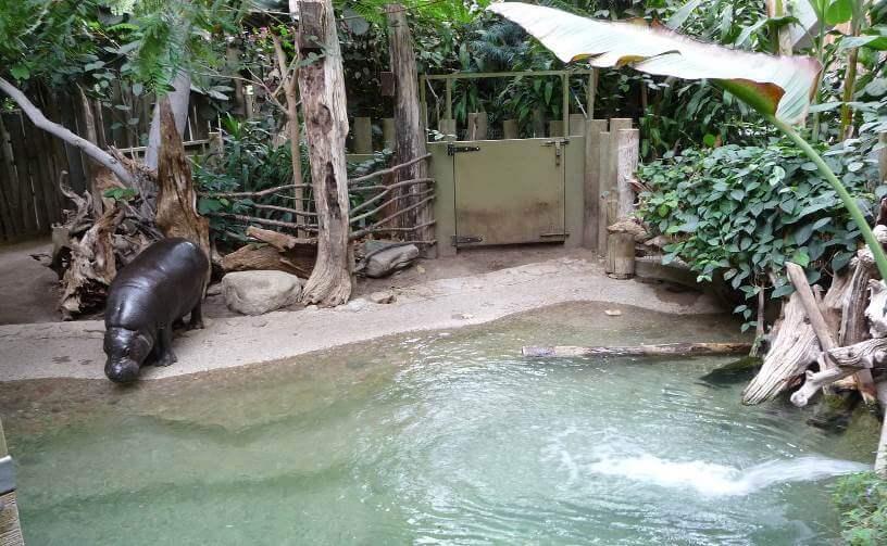 حديقة حيوان تورنتو