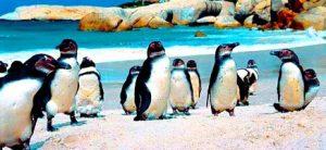 تعرف في المقال على افضل الانشطة السياحية في شاطئ بولدرز كيب تاون ، بالإضافة الى افضل فنادق كيب تاون القريبة منه