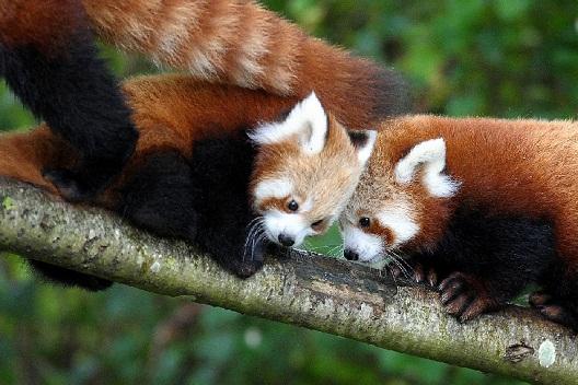 حديقة دبلن للحيوانات من اهم اماكن سياحية في دبلن