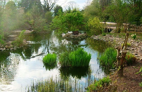 الطبيعة في حديقة حيوانات هايدلبرغ