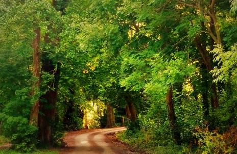 الطبيعة في حديقة كيلارني الوطنية