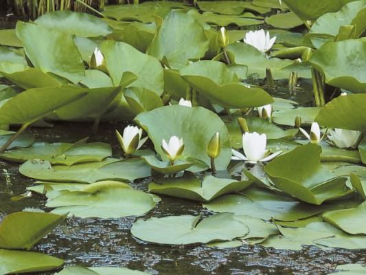 حدائق ليوبليانا النباتية