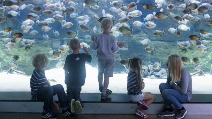 حوض الأسماك الوطني في مدينة كوبنهاجن الدنمارك
