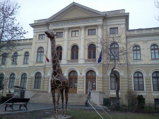 متحف التاريخ الطبيعي بوخاريست