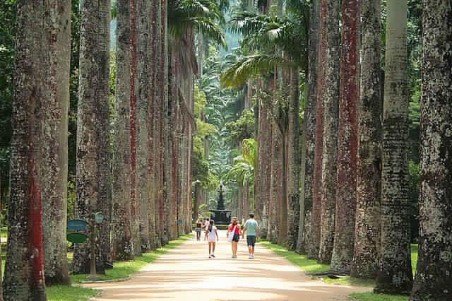 حديقة ريو دي جانيرو في البرازيل