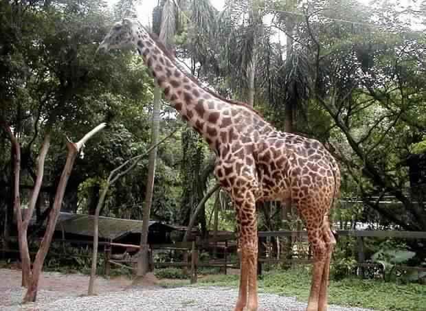 حديقة حيوانات ساو باولو من اجمل اماكن السياحة في البرازيل ساو باولو