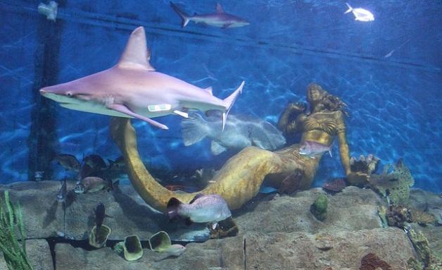 حوض حديقة حورية البحر في أكواريوم الحياة البحرية - ملبورن سياحة