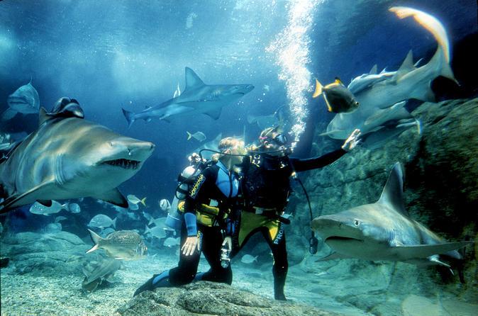الغوض مع سمك القرش في أكواريوم الحياة البحرية