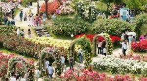 تعرف في المقال على افضل الانشطة السياحية في منتزه سيول الكبير ، بالإضافة الى افضل فنادق سيول القريبة منه