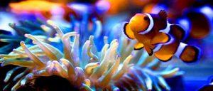 تعرف في المقال على افضل الانشطة السياحية في اكواريوم المحيطين في كيب تاون ،بالإضافة الى افضل فنادق كيب تاون القريبة منه
