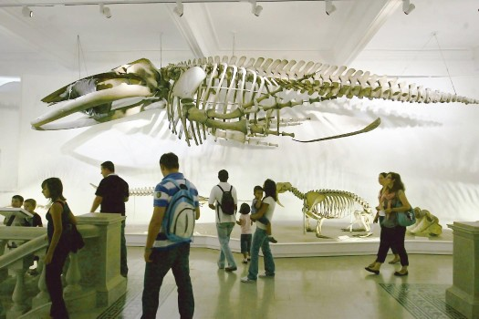 متحف التاريخ الطبيعي في بوخاريست