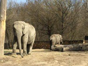 حديقة حيوانات وارسو