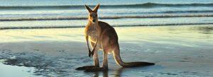 السياحه في استراليا