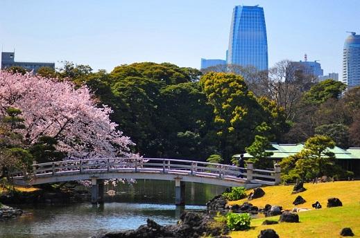 جسر حدائق هاماريكيو في طوكيو