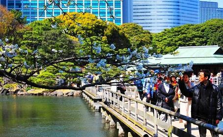 خندق حدائق هاماريكيو في طوكيو