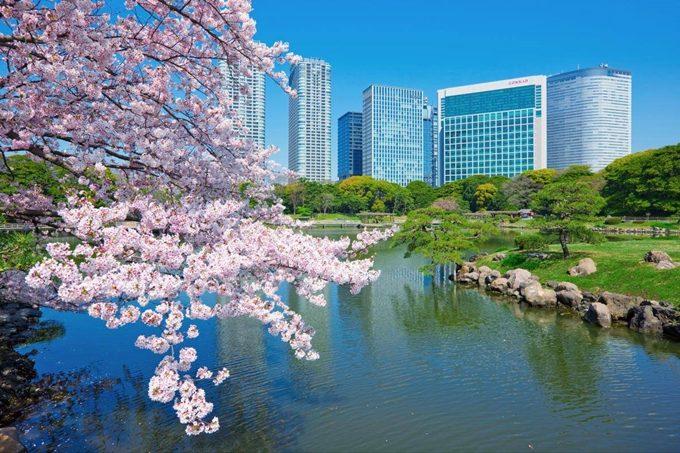 بحيرة حدائق هاماريكيو في طوكيو