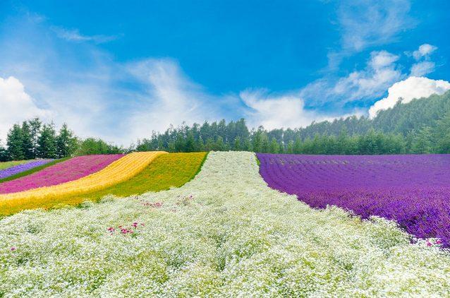 اليابان سياحة في جزيرة هوكايدو