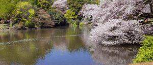 حديقة شينجوكو جيوين في طوكيو اليابان