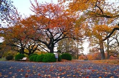 الحدائق الإنجليزية في حديقة شينجوكو جيوين في طوكيو