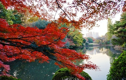 البركة السفلى في حديقة شينجوكو جيوين في طوكيو