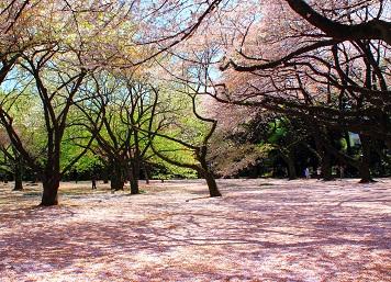 مشهد لحديقة شينجوكو جيوين في طوكيو