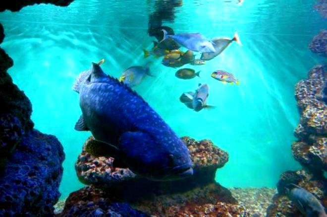 أسماك القطب المتجمد في طوكيو سي لايف بارك