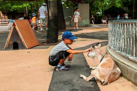 مزرعة الحيوانات الأليفة في حديقة حيوان أوينو