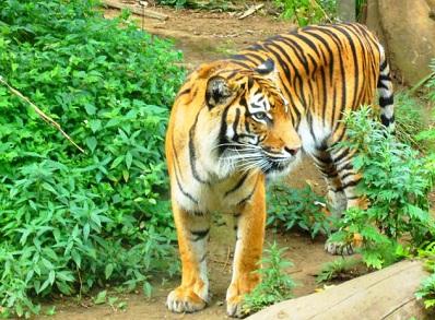 التمر في حديقة حيوان أوينو